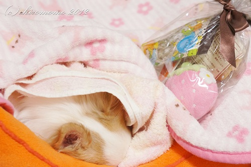 Momo's*Photograph*