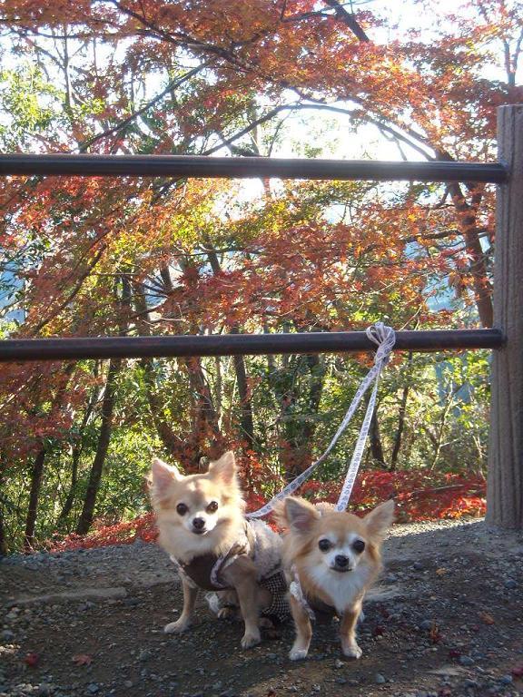 chie&ron 紅葉高尾山