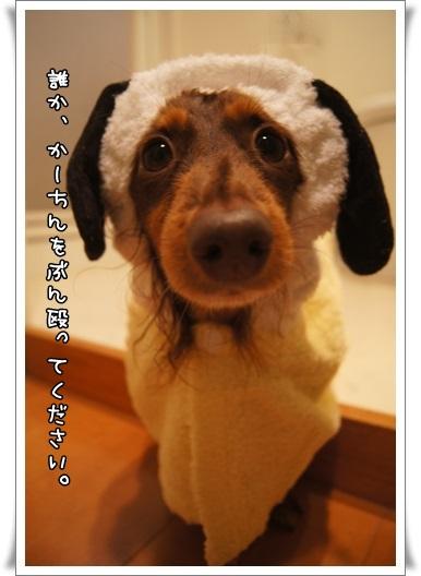 036_20141210001014056.jpg