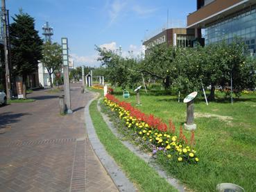 りんご並木1