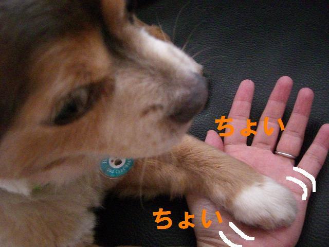 甘えんぼぽんちゃん 014