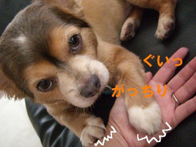 甘えんぼぽんちゃん 015