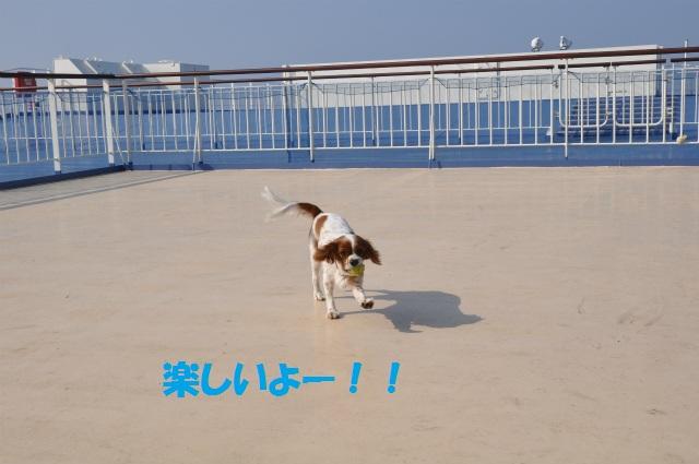 チョコとの男二人旅 北海道編2日目 016