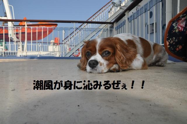 チョコとの男二人旅 北海道編2日目 025