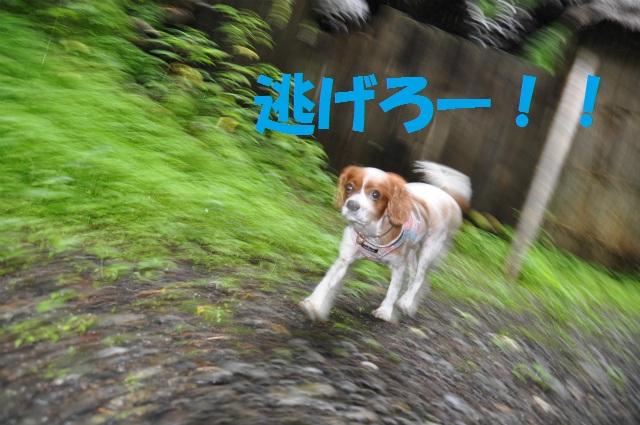 チョコとの男二人旅 北海道編3日目 096