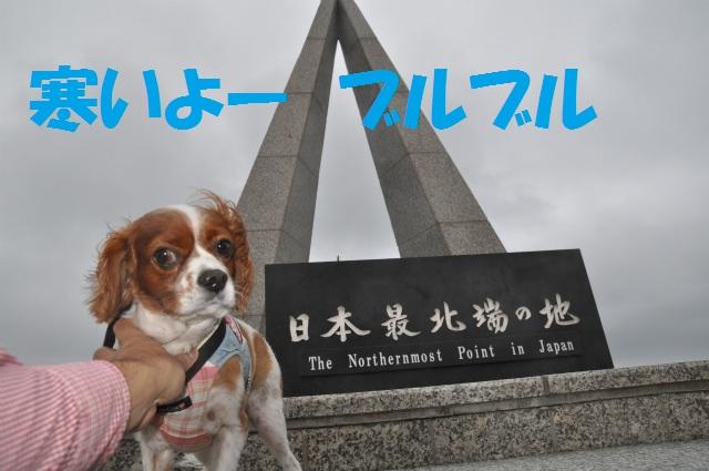 チョコとの男二人旅 北海道編3日目 168