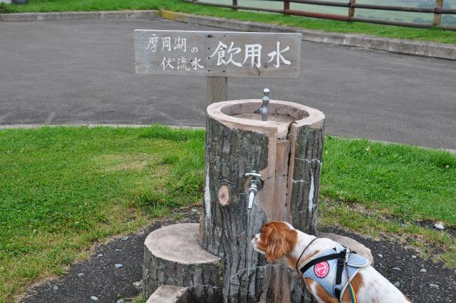 チョコとの男二人旅 北海道編5日目 022