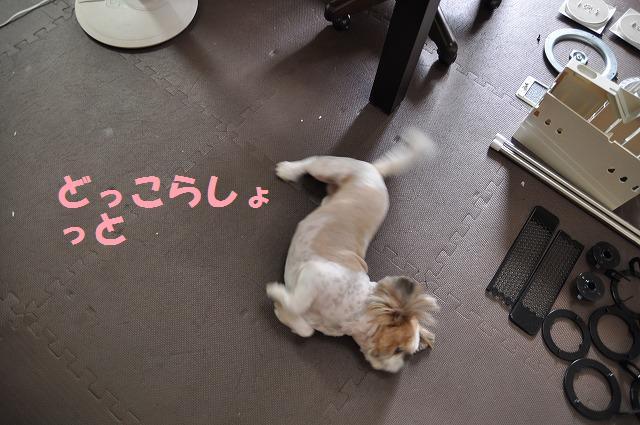 さよならパオちゃん 011