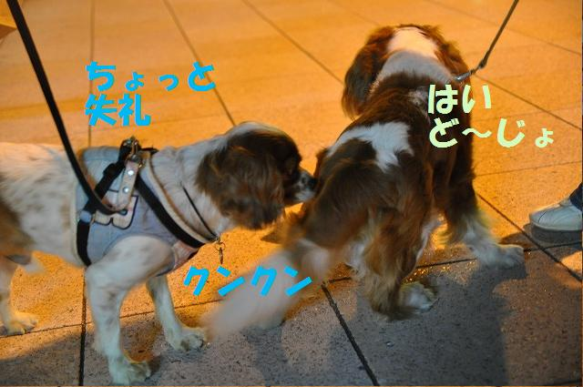 井戸端会議ならぬ犬端会議 072
