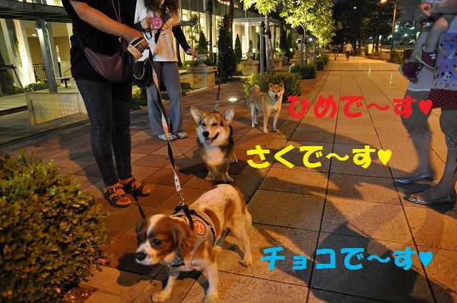 井戸端会議ならぬ犬端会議 066
