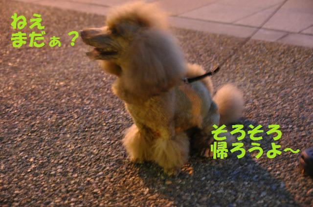 井戸端会議ならぬ犬端会議 052