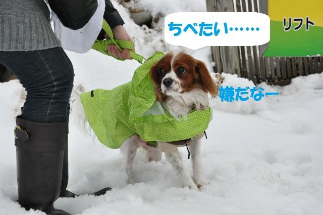 チョコはこりごり(+_+)・鳥取砂丘冬景色 061