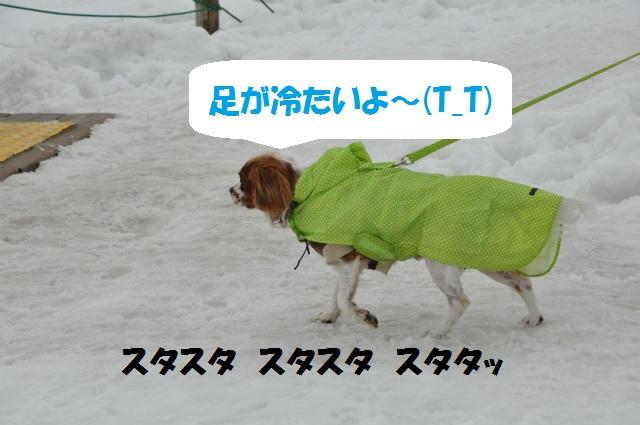 チョコはこりごり(+_+)・鳥取砂丘冬景色 065