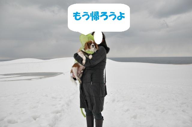チョコはこりごり(+_+)・鳥取砂丘冬景色 088
