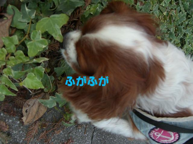 シンちゃんと朝の散歩 005