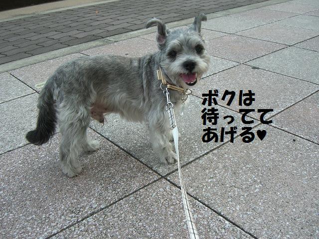 シンちゃんと朝の散歩 006