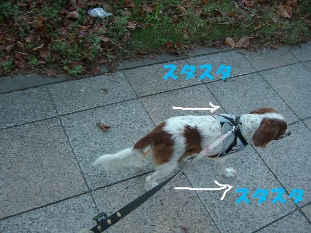 シンちゃんと朝の散歩 001