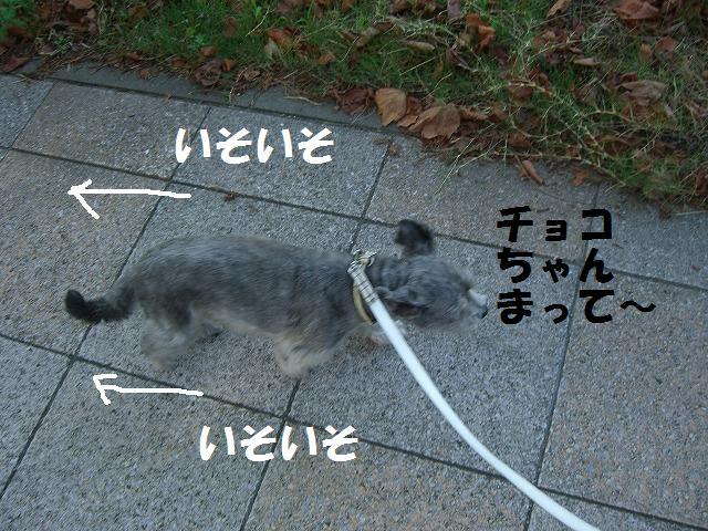 シンちゃんと朝の散歩 002
