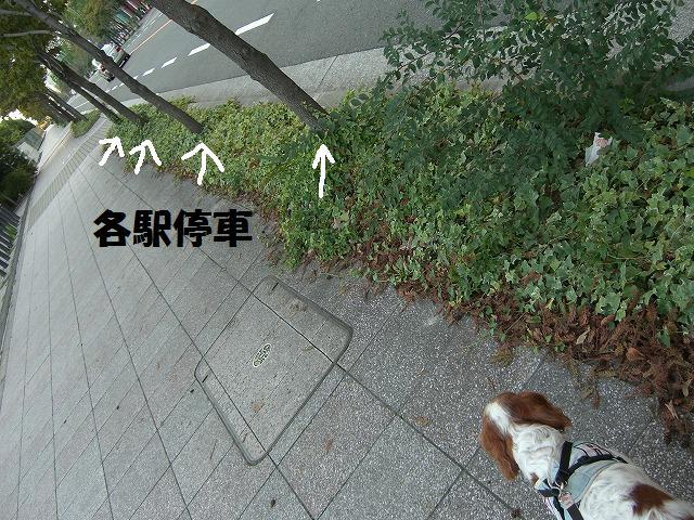 シンちゃんと朝の散歩 003