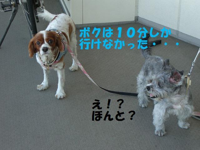 シンちゃんと朝の散歩 011