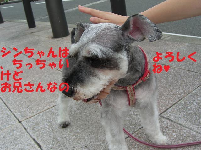 朝、散歩 006
