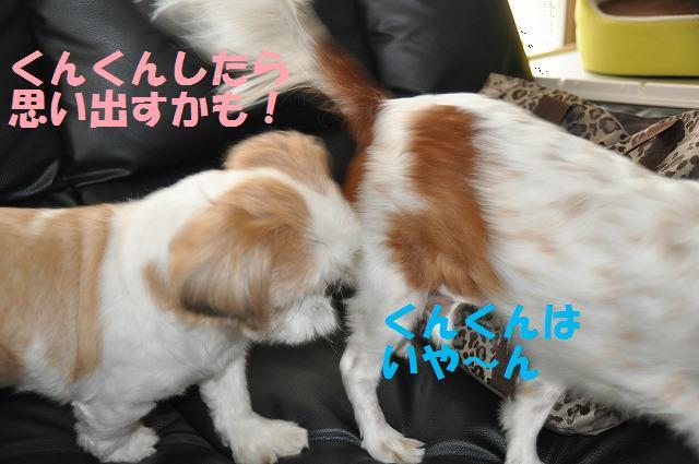 デジイチコレクション・シンちゃん編 129
