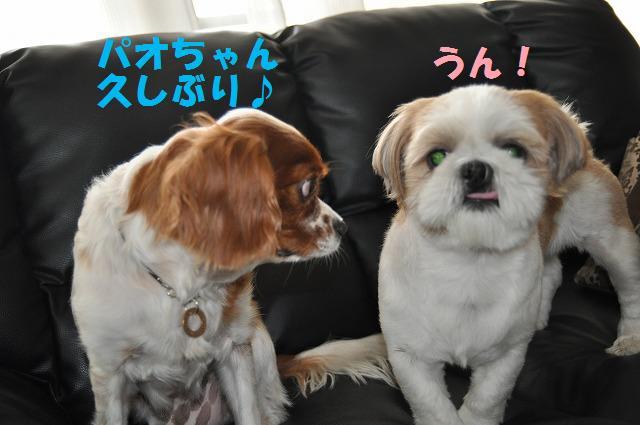 デジイチコレクション・シンちゃん編 131