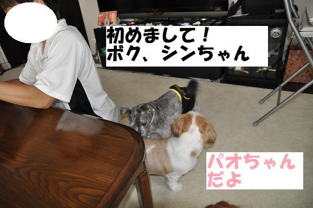 デジイチコレクション・シンちゃん編 110