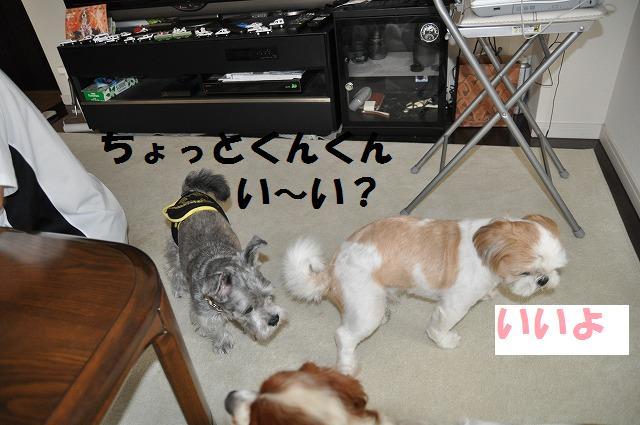 デジイチコレクション・シンちゃん編 111