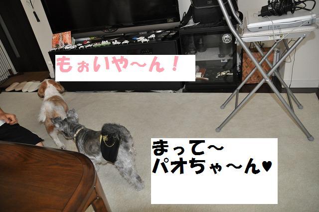 デジイチコレクション・シンちゃん編 113