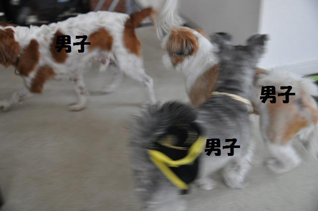 デジイチコレクション・シンちゃん編 130