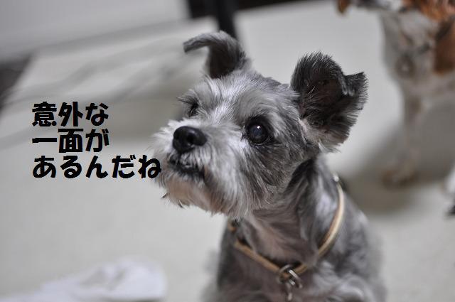 デジイチコレクション・シンちゃん編 004
