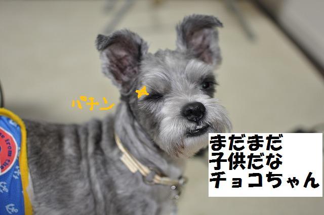 デジイチコレクション・シンちゃん編 009
