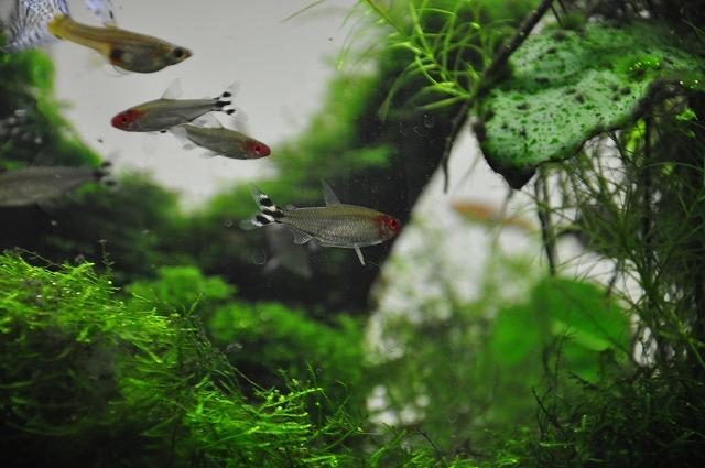 雨上がりの北港緑地と熱帯魚 108