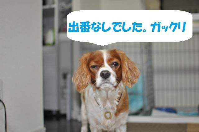 デジイチコレクション・シンちゃん編 024