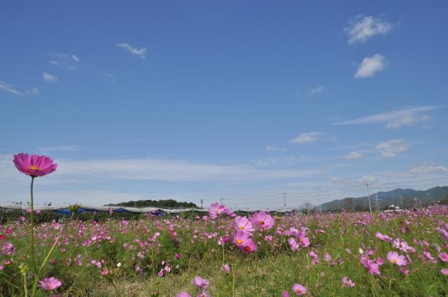 2012,10,13 ボンちゃんと滋賀県 010