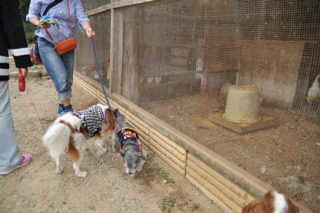 2012,10,13 ボンちゃんと滋賀県 084