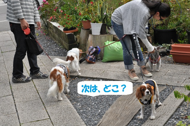 2012,10,13 ボンちゃんと滋賀県 086