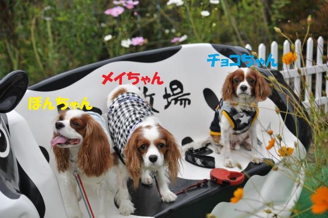 2012,10,13 ボンちゃんと滋賀県 118