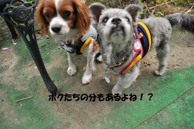 2012,10,13 ボンちゃんと滋賀県 096