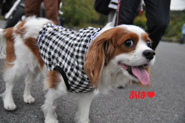 2012,10,13 ボンちゃんと滋賀県 148