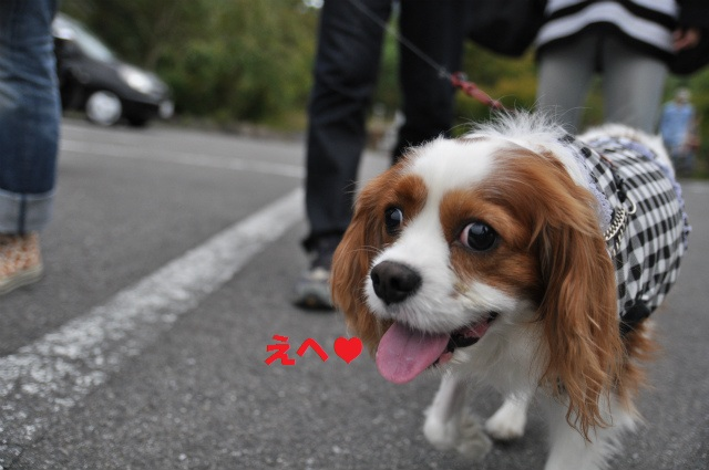 2012,10,13 ボンちゃんと滋賀県 147