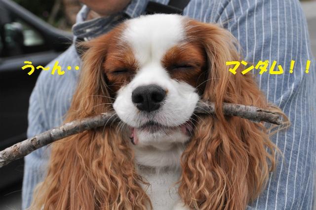2012,10,13 ボンちゃんと滋賀県 157