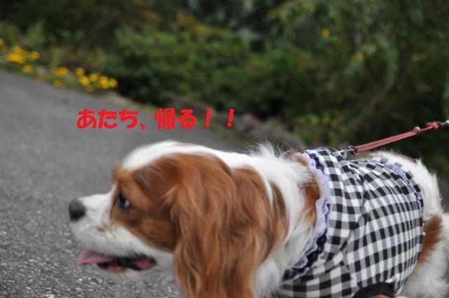 2012,10,13 ボンちゃんと滋賀県 146