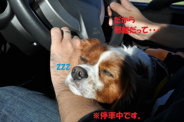 2012,10,20若狭車中泊 020