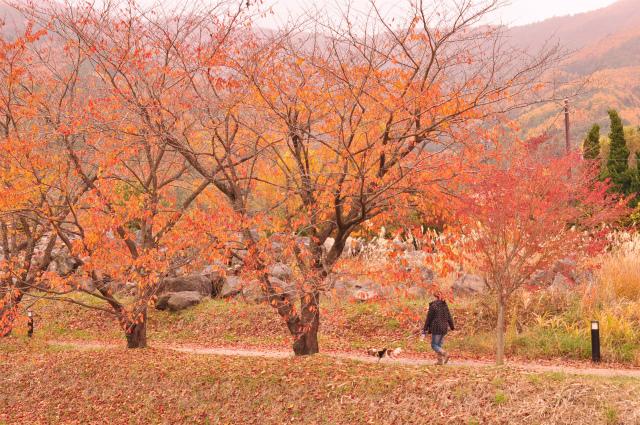 2012秋の信州 もみじ・星まつりの旅 191