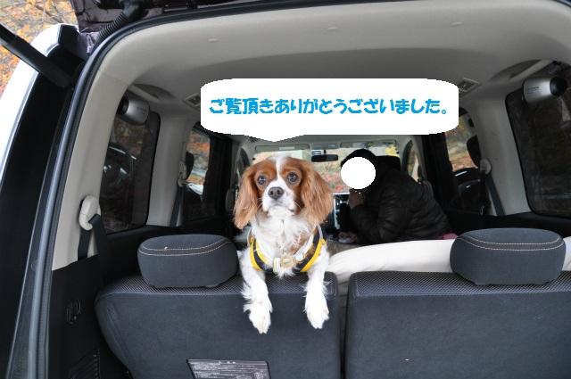 2012秋の信州 もみじ・星まつりの旅 102
