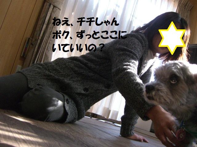 2012秋の信州 もみじ・星まつりの旅 104