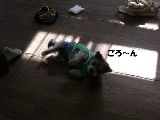 2012秋の信州 もみじ・星まつりの旅 073