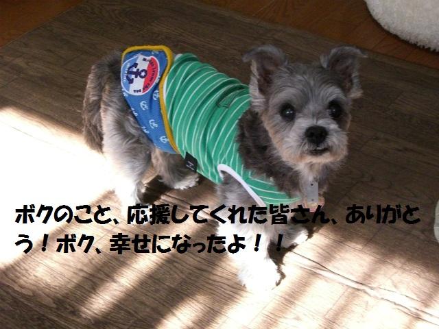 2012秋の信州 もみじ・星まつりの旅 090
